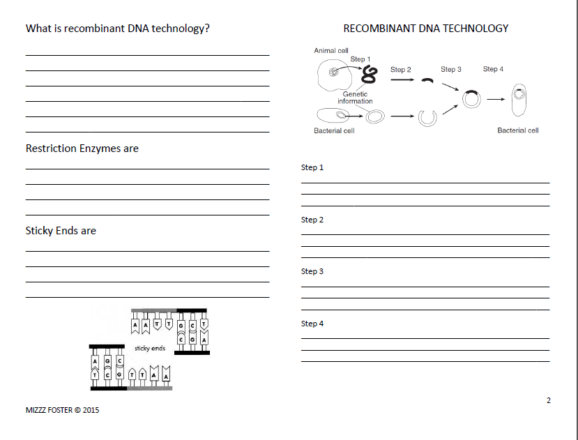 Genetic Engineering Worksheets with answers – Dna Technology Worksheet