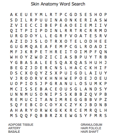 Skin Structure Anatomy Word Search