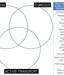 Diffusion osmosis active transport venn diagram puzzle ccuart Images
