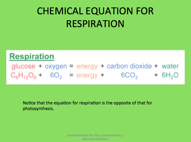 Photosynthesis, Respiration and Transpiration: Plant Processes