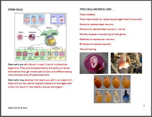 Genetic Engineering Worksheets with answers – Stem Cell Worksheet