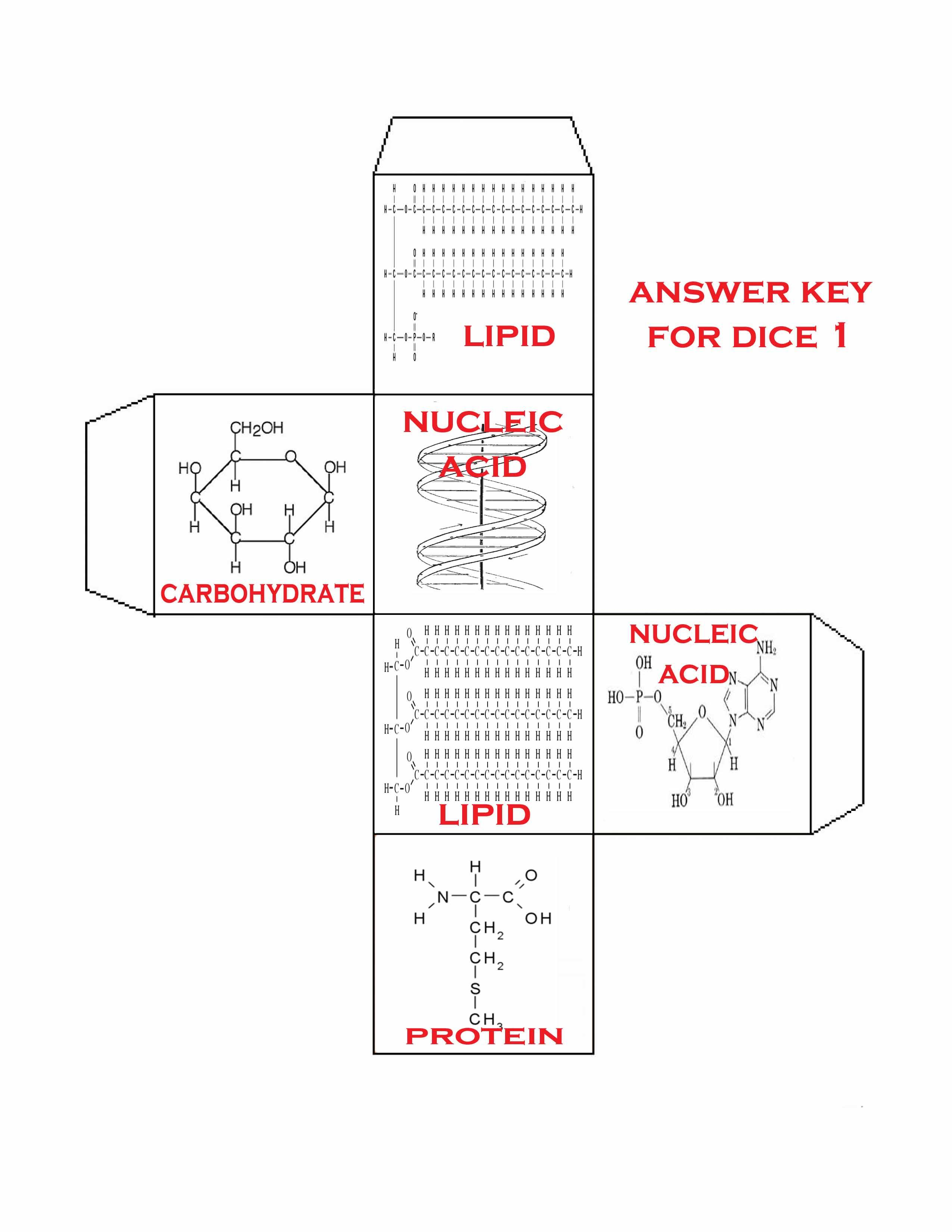 Biomolecules 3d Carbohydrates Proteins Nucleic Acids And Lipids