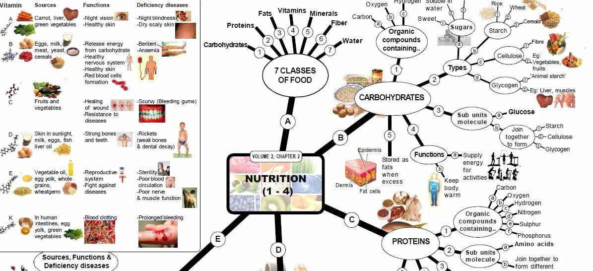 Nutrition Mind Map - Anatomy & Physiology