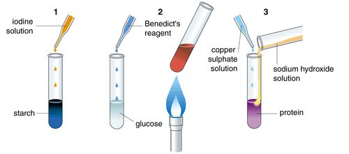 benedicts solution Benedict's reagent benedict's reagent (also called benedict's solution) is a reagent used as a test for reducing sugars including glucose, lactose, and fructose but not sucrose benedict's contains blue copper sulphate (cuso4)5h2o which is.